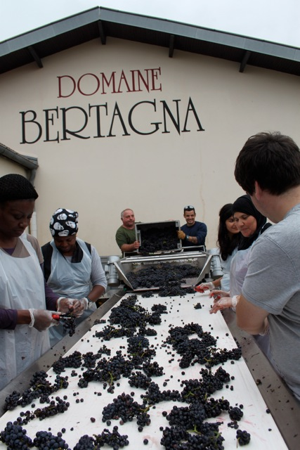 Grape sorting at Domaine Bertagna